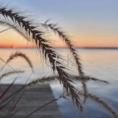 LK sunrise plant fibers