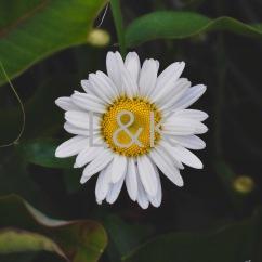 LK Web daisy